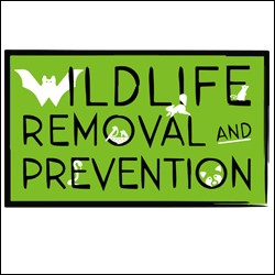 Wildlife Removal and Prevention